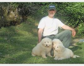 Vendita cucciolo cucciolo maschio pastore abruzzese maremmano