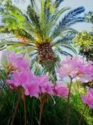 Casetta per vacanze in graziosa villa a ISCHIA