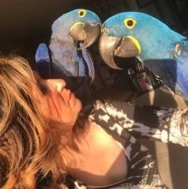 Vendita di pappagalli Ara Giacinto completamente addomesticati