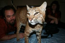 gattini esotici disponibili