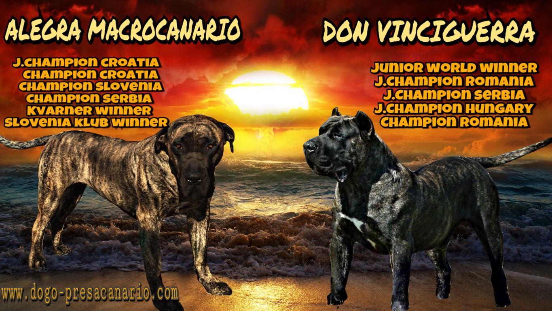 Cuccioli DOGO CANARIO