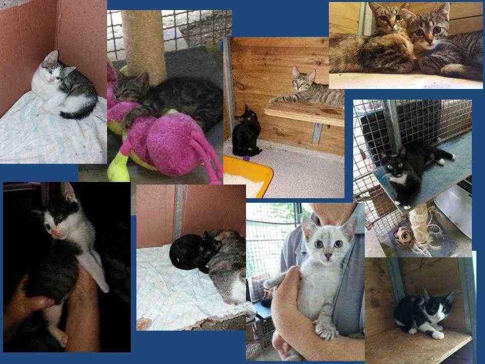 cuccioli di gatto si regalano