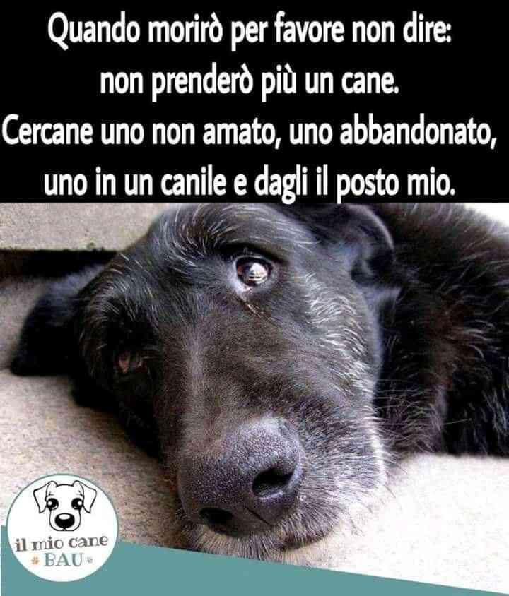 LIVORNO:cibo+ veterinario gratis prendendo cane non+ cucciolo da canile convenzionato
