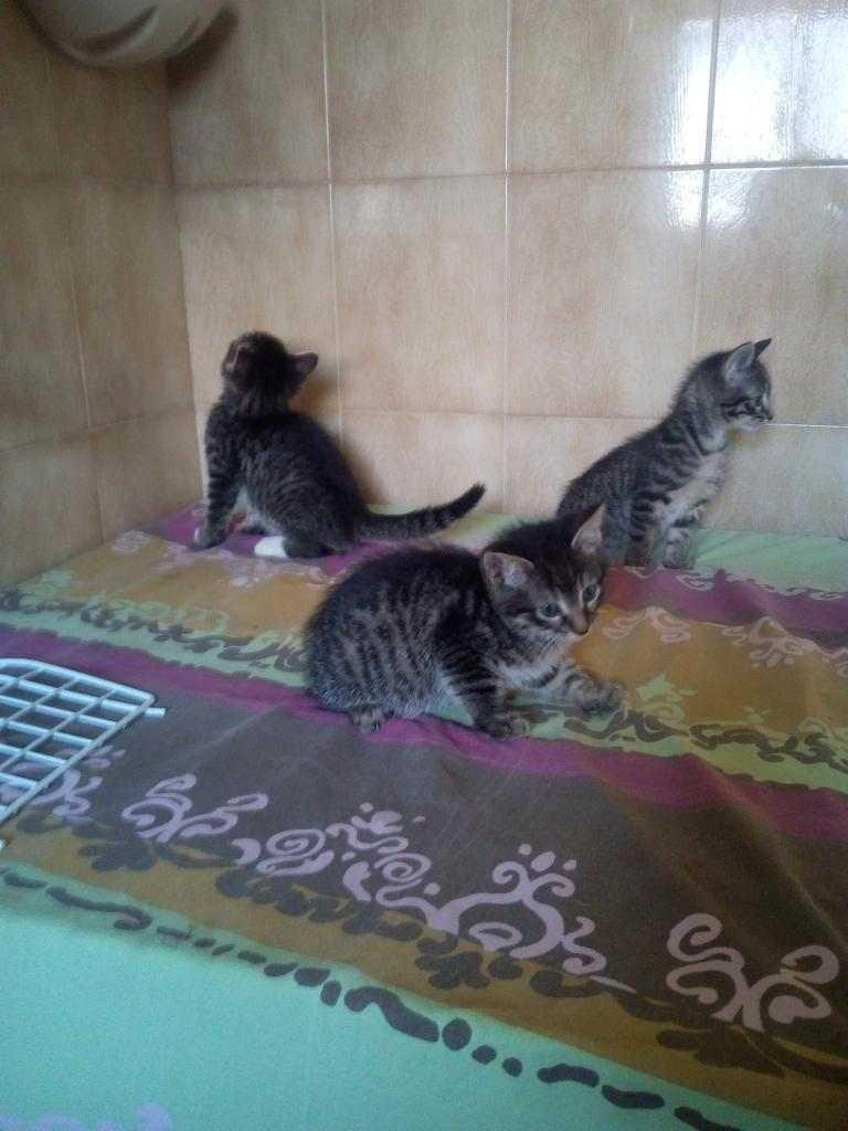 gattini di 2 mesi cercano casa accogliente
