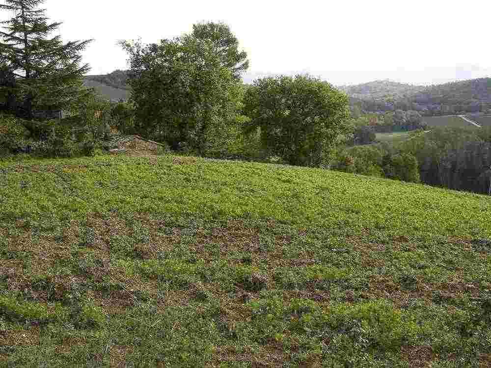 Rif. 416 terreno edificabile a Sismano di Avigliano Umbro