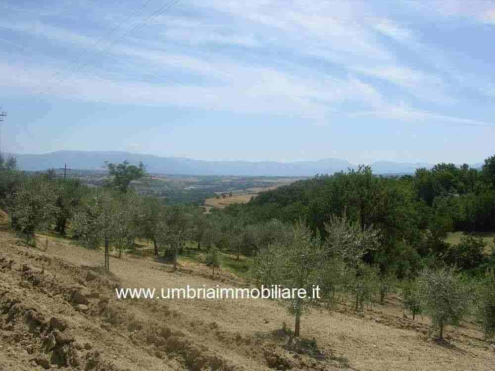 Rif. 428 terreno edificabile a Pozzo di Gualdo Cattaneo