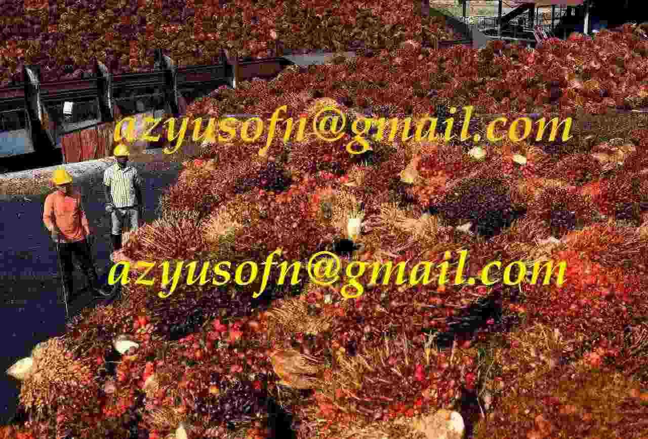 Olio di palma, olio di palmisti, oleina di palma grezza e raffinata e altri