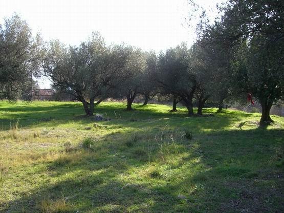 terreno agricolo ad Auletta