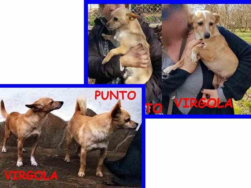 PUNTO e VIRGOLA 5-6anni dolci minicani cercano casa insieme