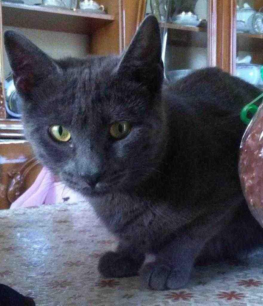 Cat-sitter Napoli/Capodimonte