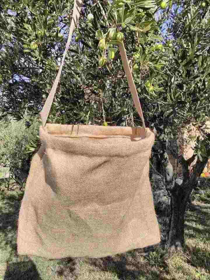 Guadagnolu Sacca x Raccogliere Olive
