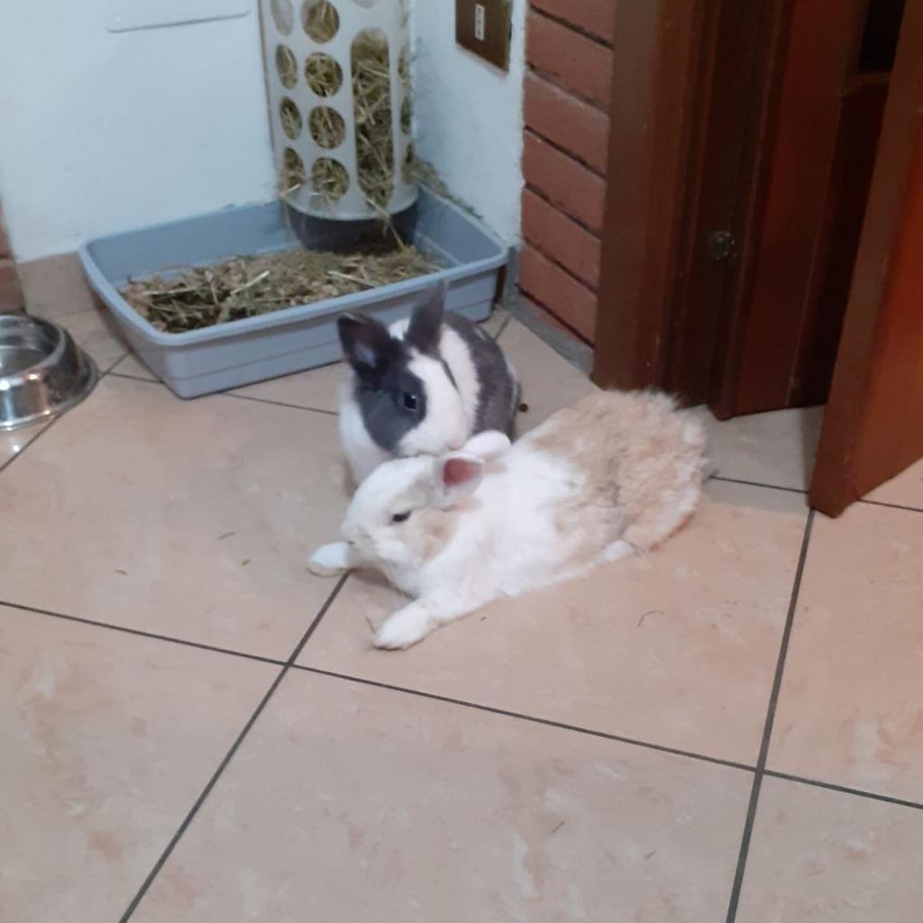 Fuffy & Roger - IN ADOZIONE