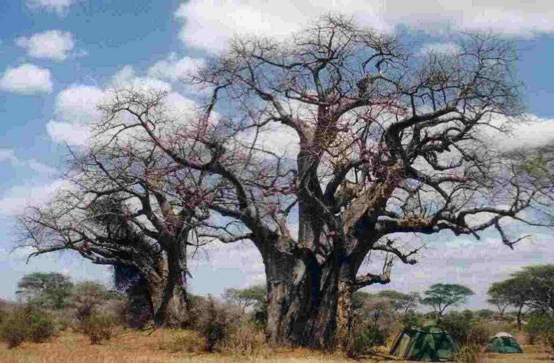 safari in africa, viaggio in africa