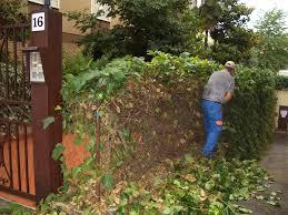Operiamo nella manutenzione e ristrutturazione dei giardini
