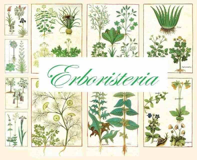 Cedesi ERBORISTERIA centralissima Termoli