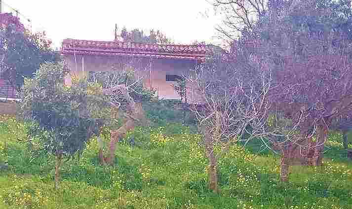 Casa di campagna con terreno di 2000 mq