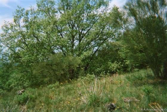 A MILIA (Biancavilla) mq 10000 terreno agricolo