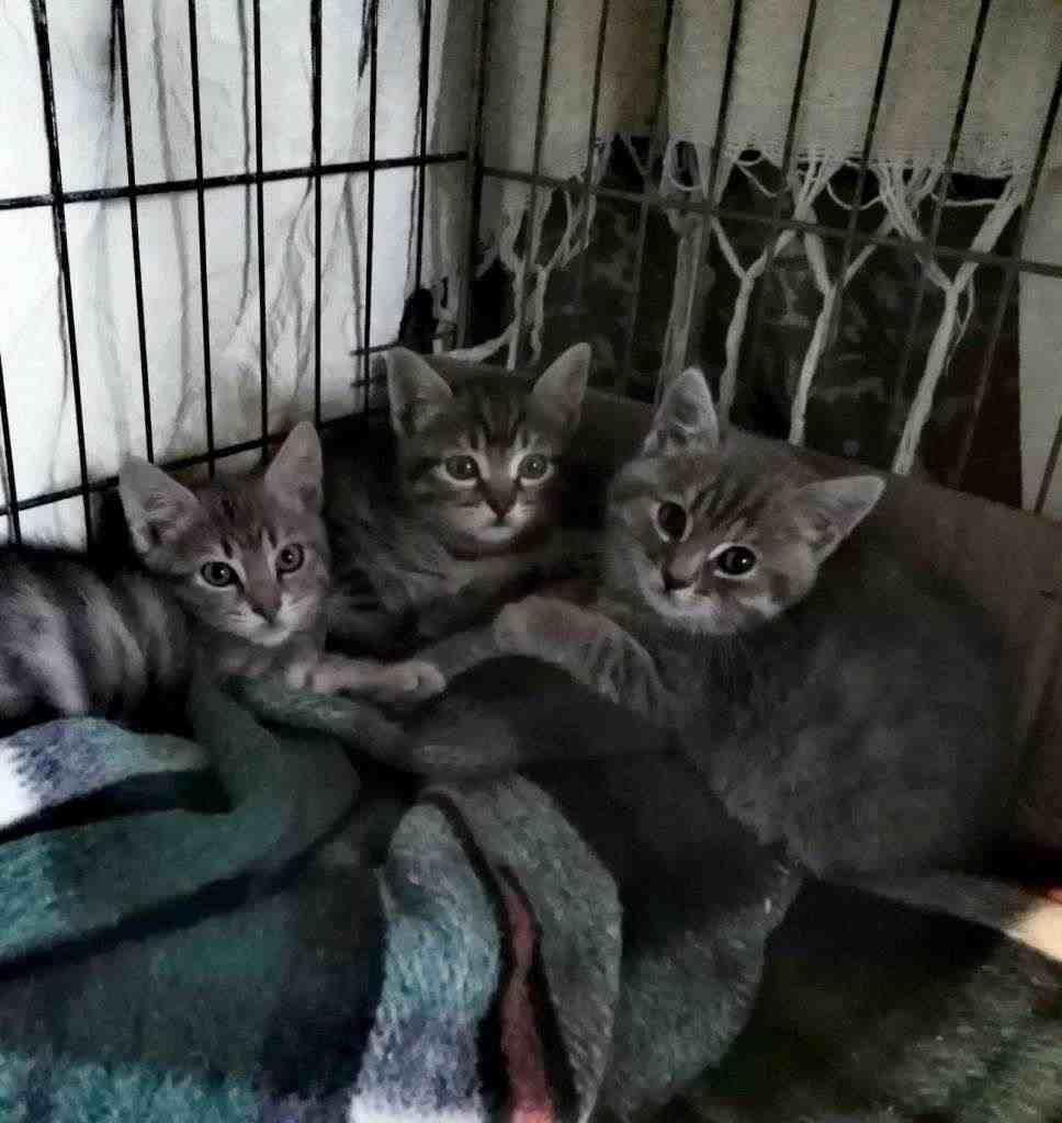 Gattini maschi e femmine cercano urgentemente casa