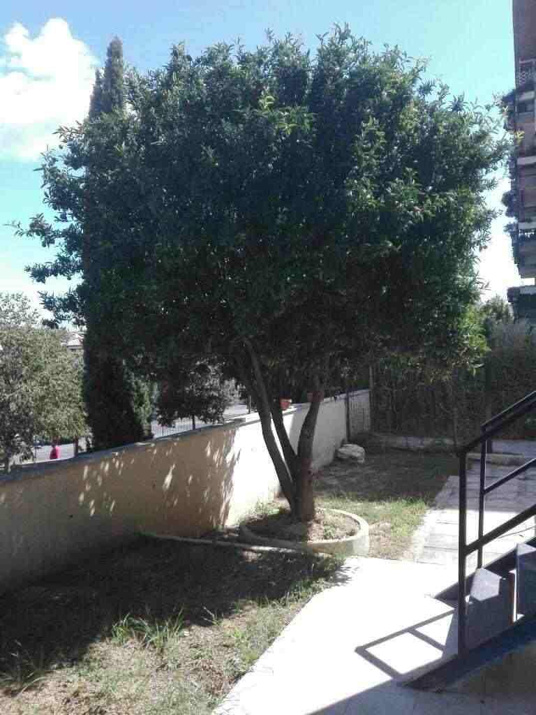 Monterotondo bilocale completamente ristrutturato con ampio giardino privato