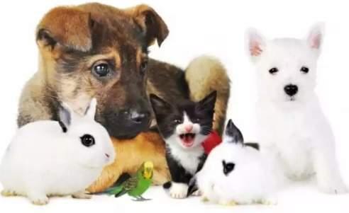 Pensione Casalinga per Animali / Pet Sitter