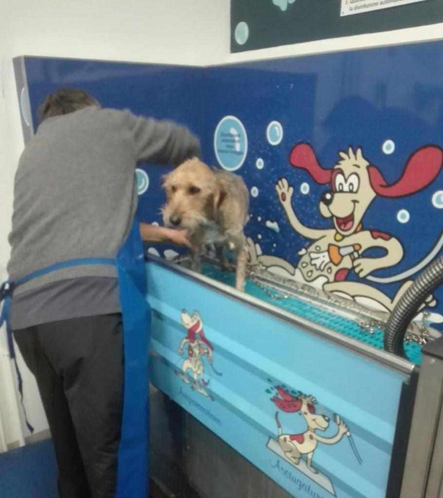 lavaggio automatico cani self service