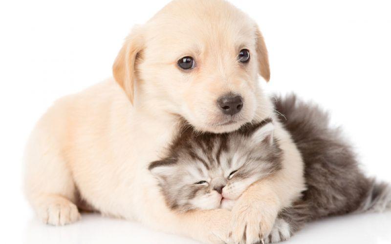 Attività vendita animali domestici
