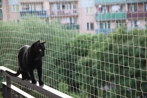 installazione rete protezione gatti per balconi e finestre